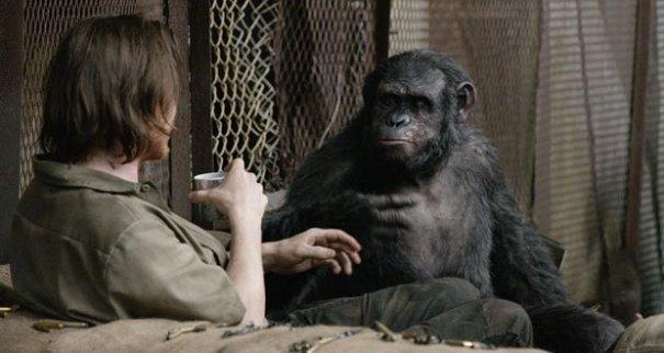 melhores-macacos