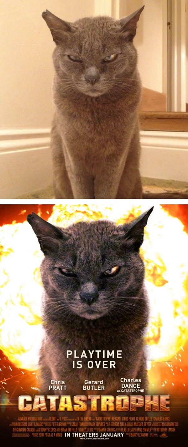 postar-cat-normal